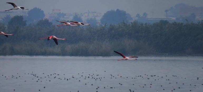 Ampliación de la Zona de Especial Protección para las Aves de El Hondo