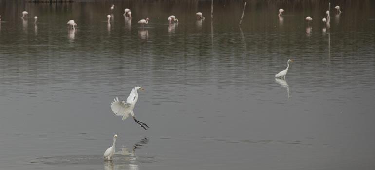 El Consell aprova l'ampliació de la Zona Especial de Protecció d'Ocells del Fondo